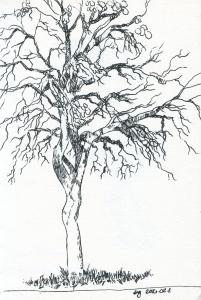kjacobi_tree