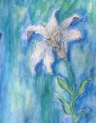 white-lillie